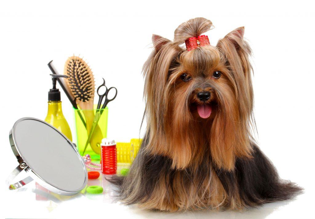 Pet Grooming Brickell