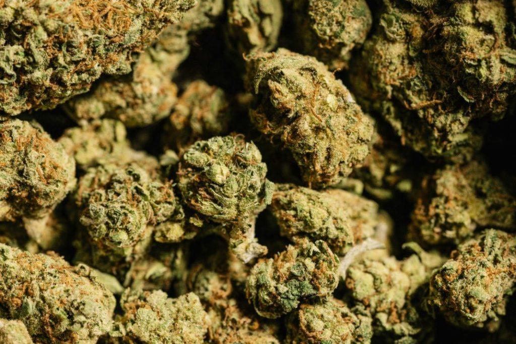 utilization of cannabis